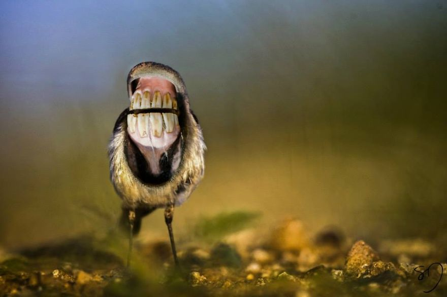 体の半分が口の鳥7