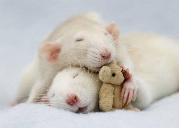 可愛らしい動物の画像2