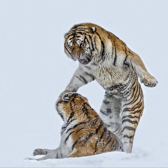 野生の動物のいい写真27