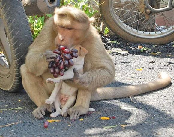 サルが犬を保護7