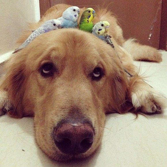 鳥と犬が友達になった結果19
