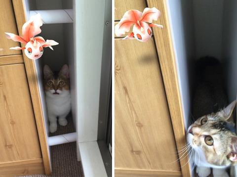 ペットはポケモンを見ることが出来る1
