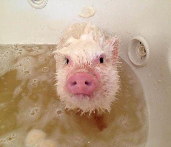 入浴中の動物4