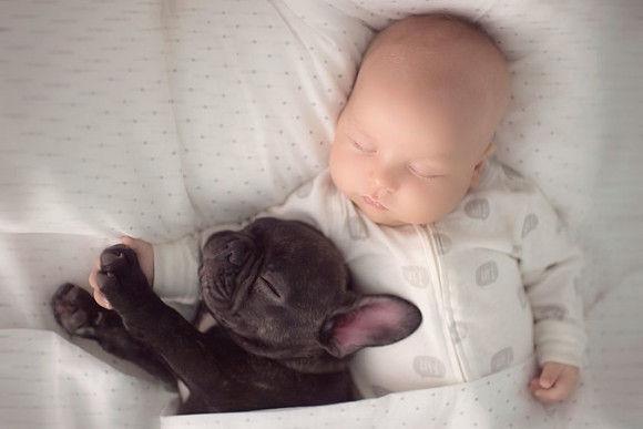 同じ日に生まれた犬と赤ちゃん5