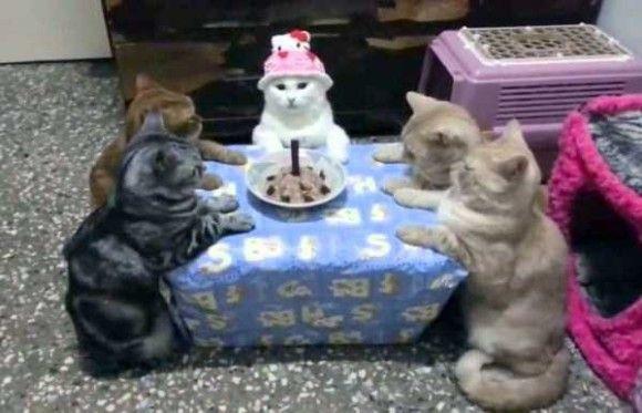 誕生日を祝ってくれるペット画像6