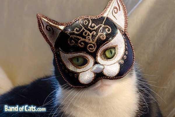 8コスチュームをした猫