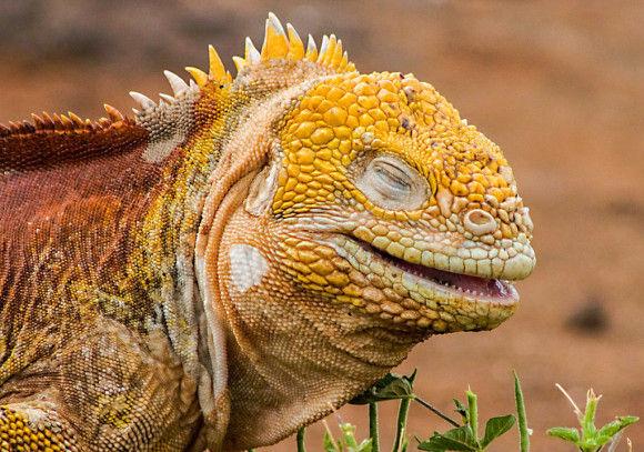 動物達の最高の笑顔11