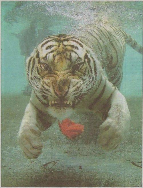 挑発的な動物9