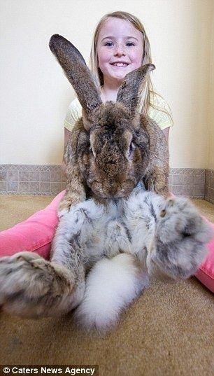 世界一大きいウサギ5