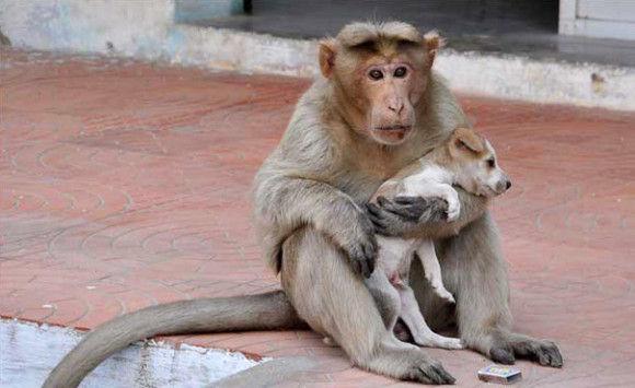 サルが犬を保護1