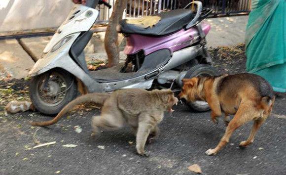 サルが犬を保護2