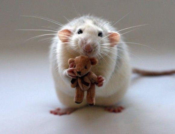 可愛らしい動物の画像3