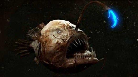 深海生物4