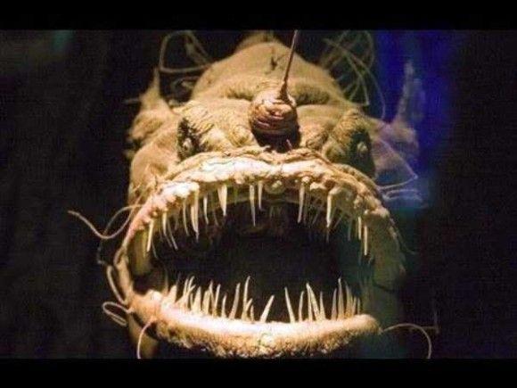 深海生物16
