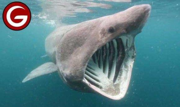 深海生物18