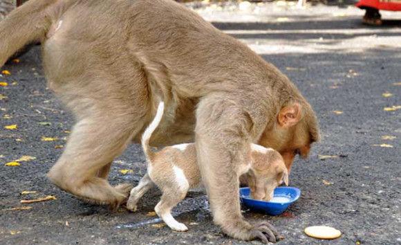 サルが犬を保護3