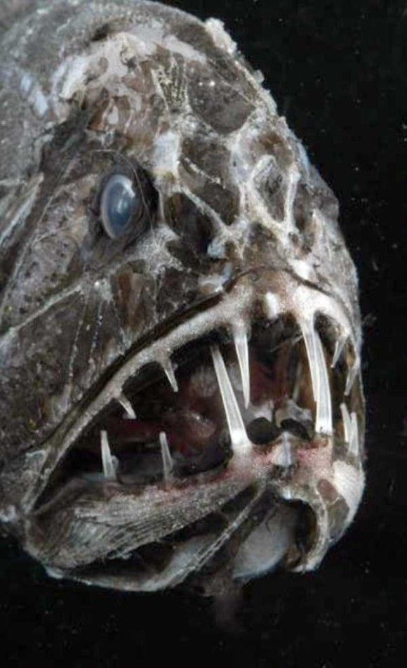 深海生物12