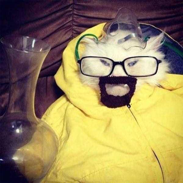 12コスチュームをした猫