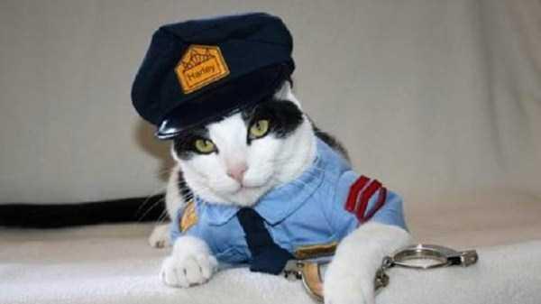 17コスチュームをした猫