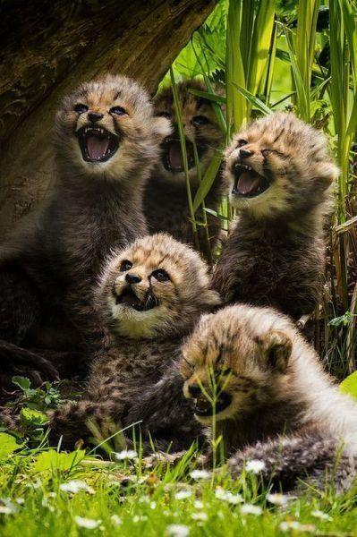 動物達の最高の笑顔12