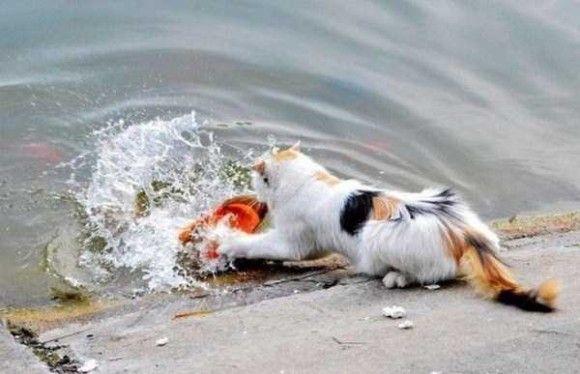 金魚VSネコ2