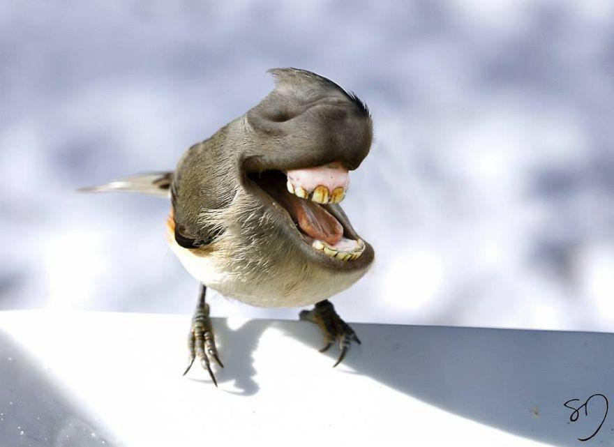 体の半分が口の鳥10