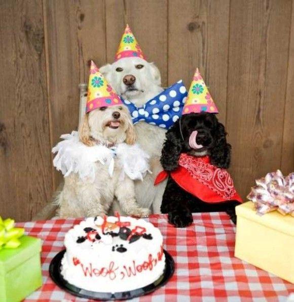 誕生日を祝ってくれるペット画像10