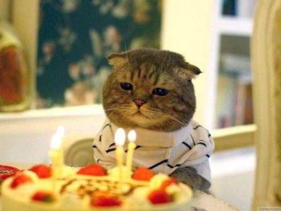 誕生日を祝ってくれるペット画像3