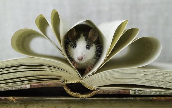 可愛らしい動物の画像5