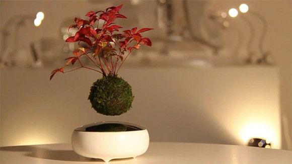 エア盆栽1
