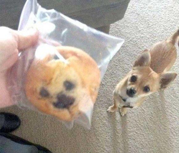 あるものに似すぎな犬11
