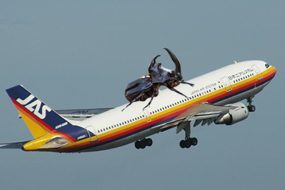 カブトムシに乗るカエル-飛行機