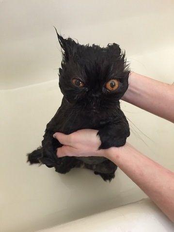 入浴中の動物1