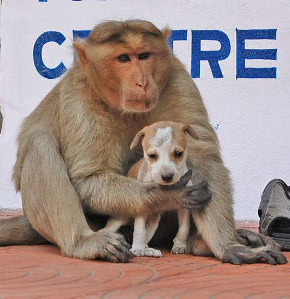サルが犬を保護9