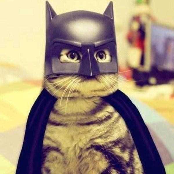16コスチュームをした猫