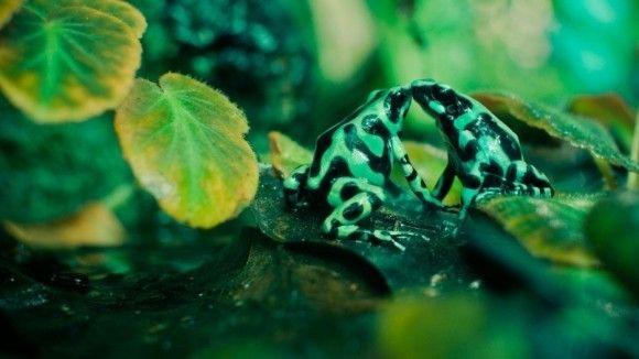 野生の動物のいい写真18