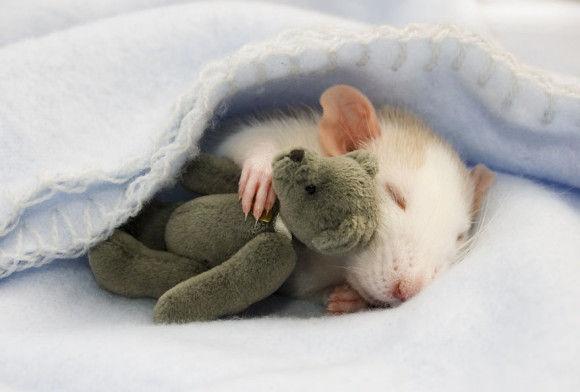 可愛らしい動物の画像1