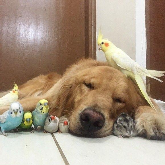 鳥と犬が友達になった結果20