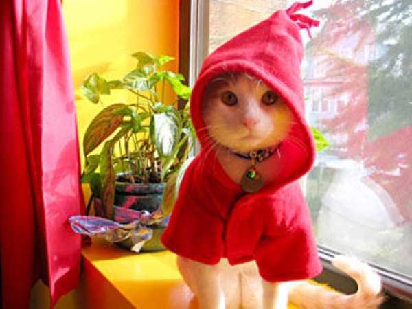 5コスチュームをした猫