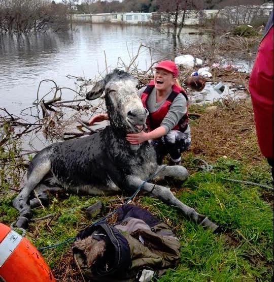 洪水から救出されたロバ8