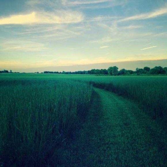iPhoneで撮影した素晴らしい画像8
