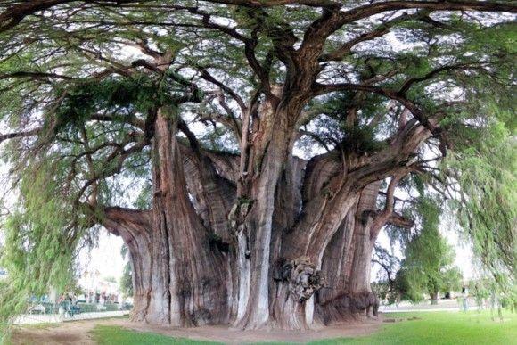 この木なんの気?2