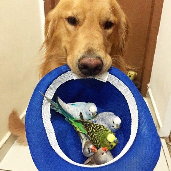 鳥と犬が友達になった結果14