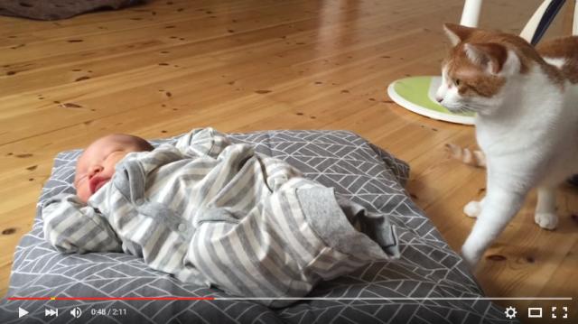 s_ネコが赤ちゃんと初対面4