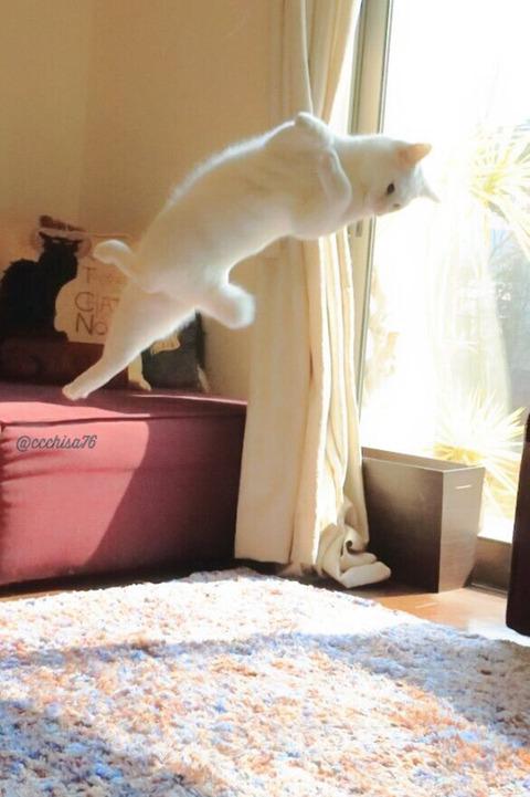 バレエを踊る猫3