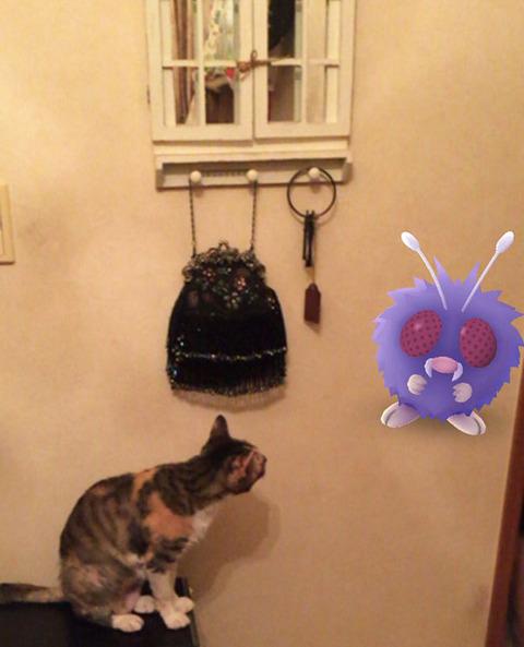ペットはポケモンを見ることが出来る9