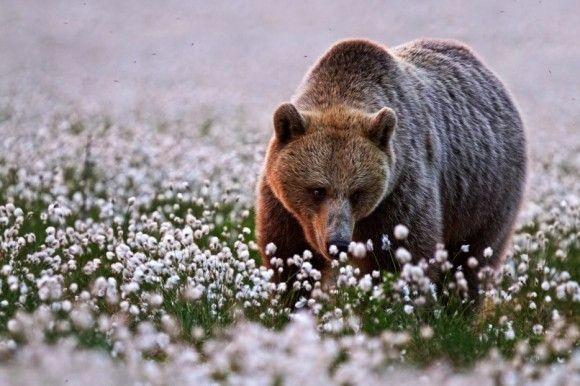 野生の動物のいい写真5