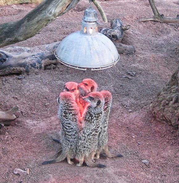 暖かい所を好む動物5