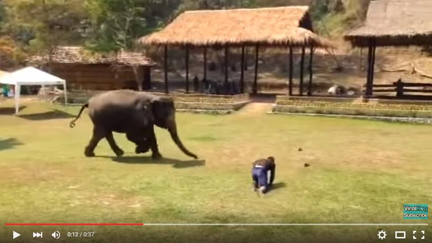 飼育員を助けるゾウ6
