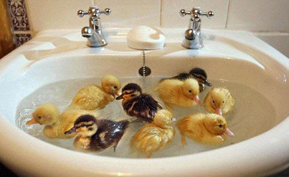 入浴中の動物17
